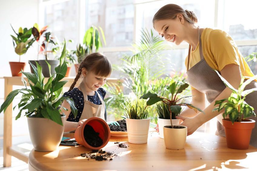 Mama z córką stoją przy stole, na którym postawione są doniczki z kwiatami, jak dbać o rośliny zimą