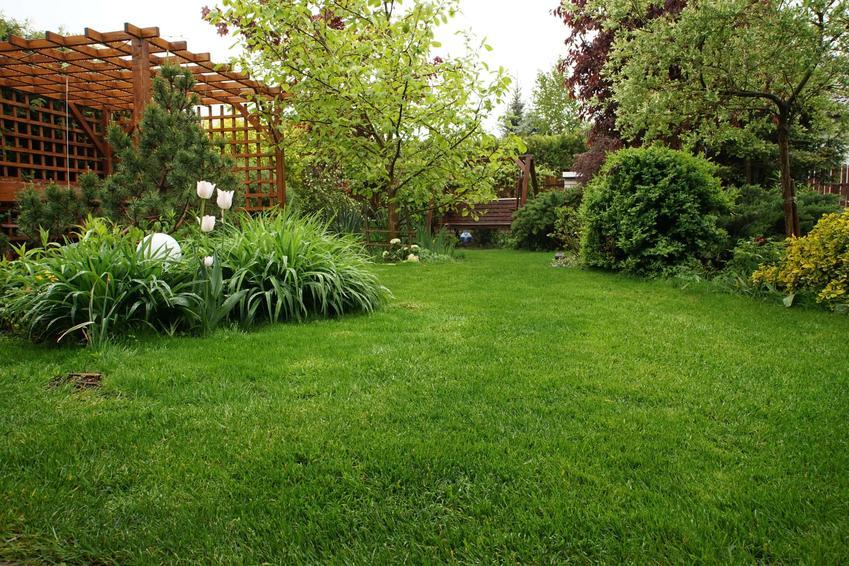 Zielony ogród z idealnie przystrzyżonym trawnikiem, wertykulator spalinowy czy elektryczny, jak często wykonywać wertykulację trawnika