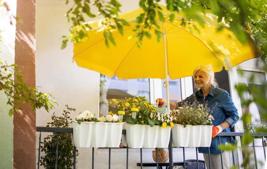 Starsza, uśmiechnięta kobieta stoina balkonie podlewając kwiaty, siatka zabezpieczająca na kwiaty balkonowe