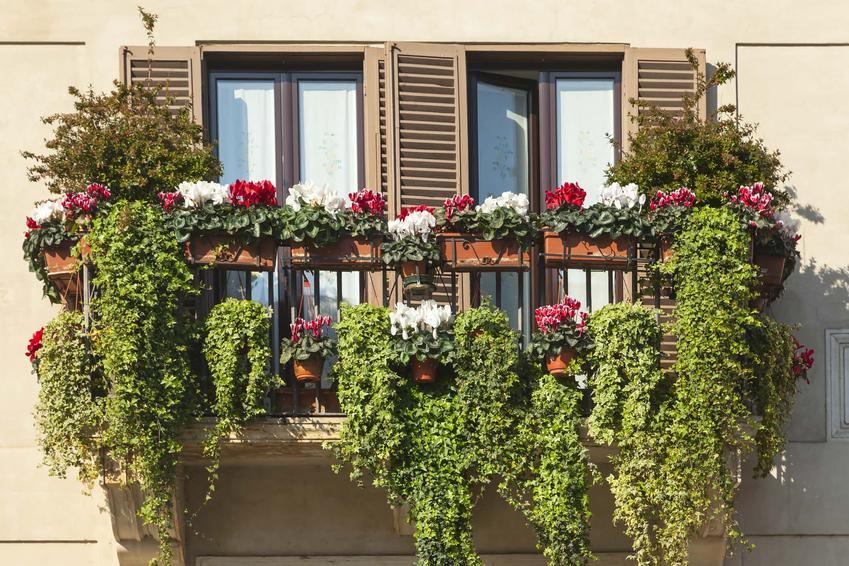 Dużo zielonych roślin na balkonie, kwiaty zwisają z balustrady, co to jest pergotenda i do czego służy, jakie są rodzaje zabezpieczeń roślin balkonowych