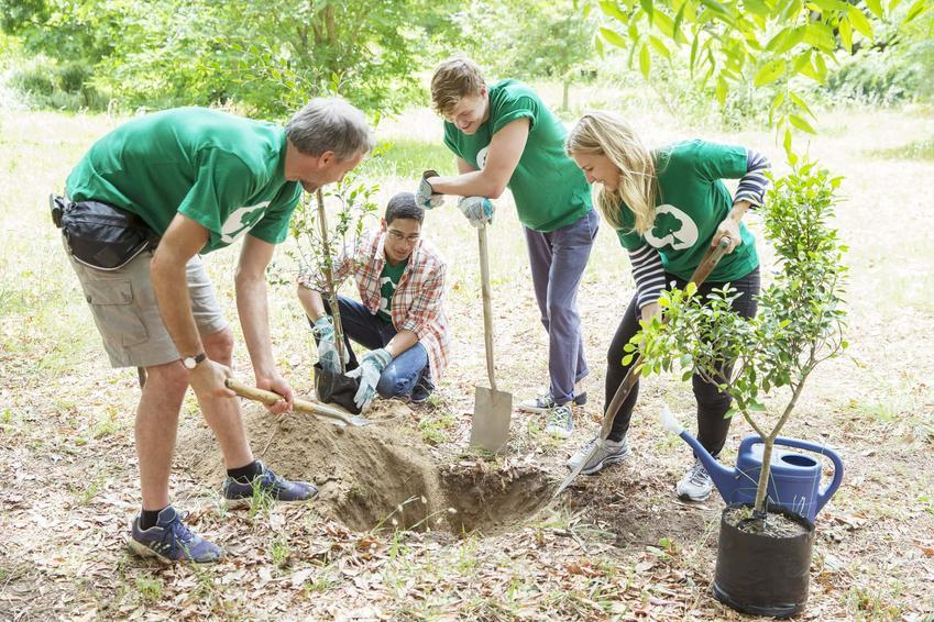 Grupa ludzi pochyla się nad ziemią i sadzą drzewo, czym się różni zalesianie od zadrzewiania, dlaczego sadzi się drzewa przy drogach