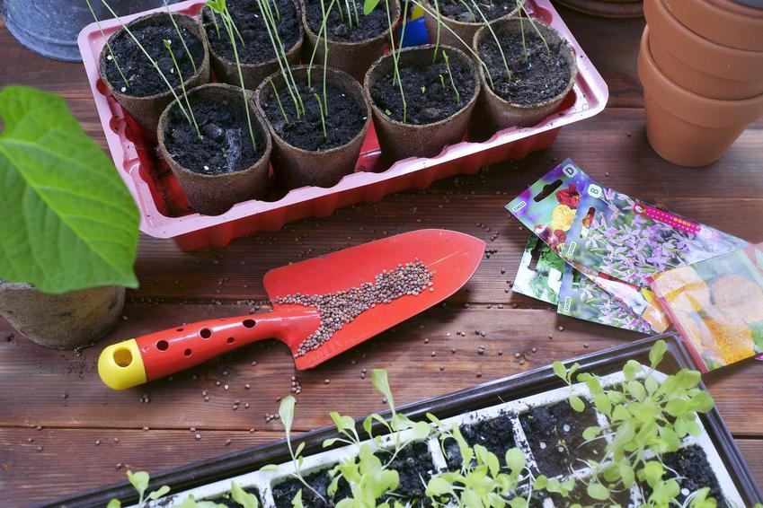 Zastosowanie torfu kwaśnego (wysokiego) do przygotoowania sadzonek i rozsad młodych warzyw krok po kroku