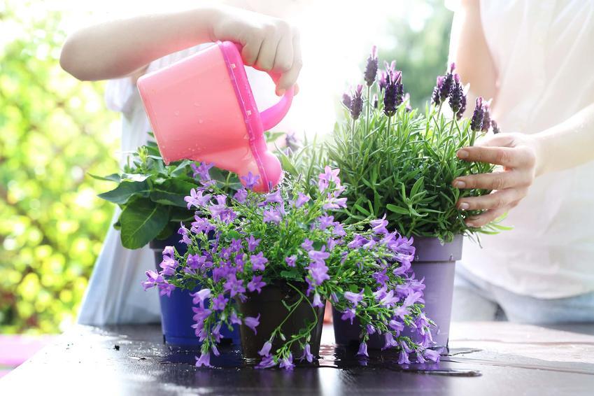 Kobieta w rękawiczkach ogrodowych podlewa kwiat doniczkowy, czego brakuje roślinie kiedy przestaje rosnąć, kwiat nie rozwija się i stoi w miejscu