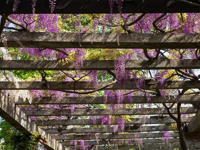 Pergole ogrodowe sa naprawdę przepiękne. Pozwalają na zamocowanie różnego rodzaju pnączy, które są najlepszą ozdobą.