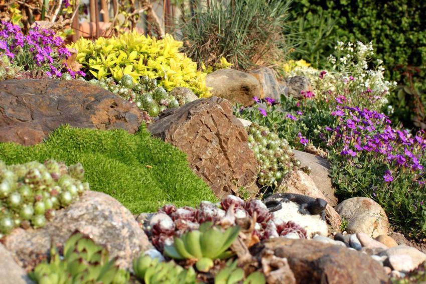 Rośliny na skalniak w ogrodzie to bardzo duży wybór, dzięki któremu możesz zrobić bardzo kolorową kompozycję. Skalniaki są niezwykle oryginalne.