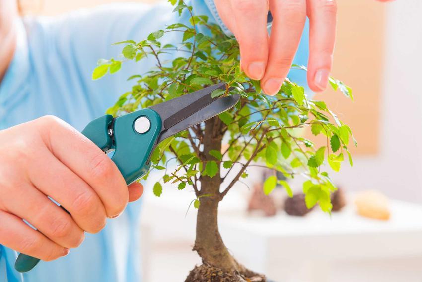 Drzewko bonsai to jeden z najciekawszych sposobów formowania roślin. Liczne odmiany pozwalają na uzyskanie różnych form i kształtów.