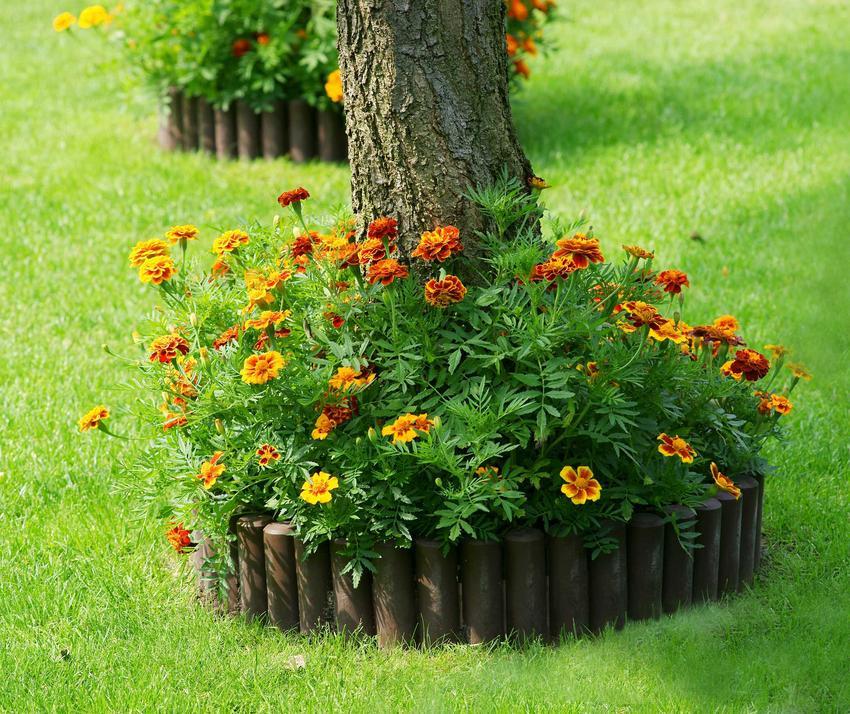 Palisada betonowa ma wiele zastosowań. Można używać jej wokół niewielkich rabatek, by dobrze je oddzielić od reszty ogrodu.