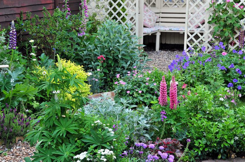 Popularne rośliny ogrodowe to przede wszystkim byliny. Są trwałe i bardzo ładnie się prezentują, a ich ceny nie są wysokie.