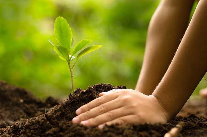 Sadzonka rośliny ogrodowej, a także cennik najpopularniejszych roślin ogrodowych oraz sadzenie roślin w ogrodzie