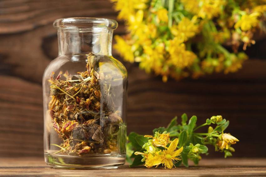 Dziurawiec zwyczajny to jedna z bardziej atrakcyjnych roślin leczniczysz. Czasami uprawia się go ze wględu na ładne kwiaty, ale ma także zastosownaie lecznicze.
