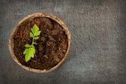 Torf do ogrodu - rodzaje, zastosowanie, skład, porady