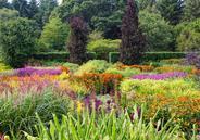 Krzewy i byliny cieniolubne – co warto wybrać do ogrodu?