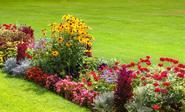 Byliny kwitnące latem – co wybrać do ogrodu?