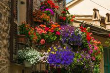 15 najlepszych kwiatów na balkon - zobacz, które kwiaty nadają się na balkon