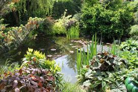 Jak zrobić własne oczko wodne w ogrodzie krok po kroku?