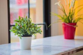 Najlepsze kwiaty pokojowe do domu - każdy może je hodować