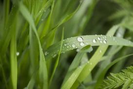 Perz - zwalczanie popularnego chwastu w ogrodzie