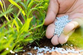 Nawozy azotowe - rodzaje, ceny, zastosowanie do różnych roślin