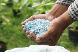 Nawozy fosforowe - rodzaje, ceny, zastosowanie do różnych roślin