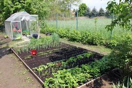 Nowalijki wiosenne w przydomowym ogrodzie – uprawa, pielęgnacja, terminy sadzenia
