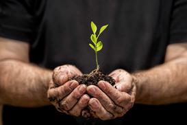 Rozmnażanie wegetatywne - jak to działa dla różnych roślin?