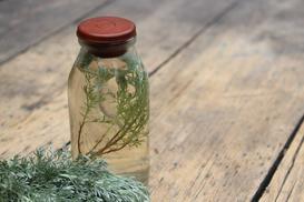 Nalewka na piołunie – przepis na nalewkę z ziela piołunu – działanie, właściwości, porady