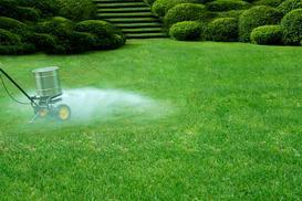 Jaki nawóz do trawy wybrać? Sprawdzamy najlepsze preparaty do nawożenia trawnika
