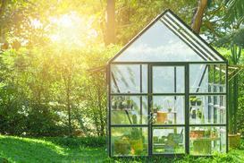 Co sadzić w szklarni? 5 najlepszych roślin, które najlepiej uprawiać w szklarni