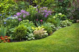 10 najpiękniejszych krzewów kwitnących wiosną i latem w ogrodzie