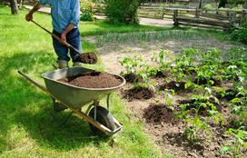 Uprawa ziemniaka krok po kroku - sadzenie, zbiór, nawożenie, porady