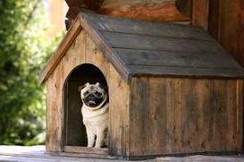 Jak zrobić budę dla psa - praktyczny poradnik krok po kroku