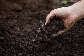 Użyźnianie gleby krok po kroku - jak użyźnić ziemię w ogrodzie?