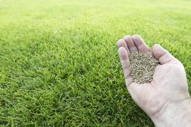 Które nasiona traw wybrać? Rodzaje traw, ceny, opinie, porady