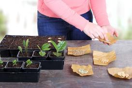 Nasiona warzyw krok po kroku - co i jak wybrać, ceny, porady