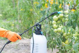 Miedzian na pomidory, brzoskwinie, truskawki, róże i inne rośliny - praktyczny poradnik