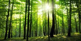 Pielęgnacyjne cięcie lasu krok po kroku - jak wygląda w praktyce?