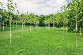 Przesadzanie drzew krok po kroku - terminy, ceny, porady praktyczne