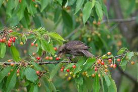 6 najskuteczniejszych sposobów na odstraszanie ptaków - wypróbuj je!