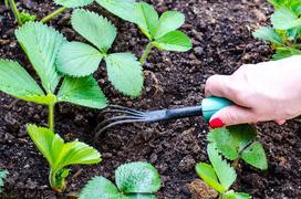 Spulchnianie gleby krok po kroku - najlepsze narzędzia i porady