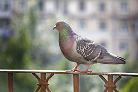 Jak wybrać odstraszacz gołębi? Oto 5 rzeczy, na które warto zwrócić uwagę