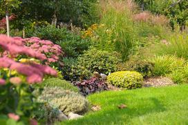 Sadzonki traw ozdobnych - rodzaje, ceny, opinie, na co zwrócić uwagę?