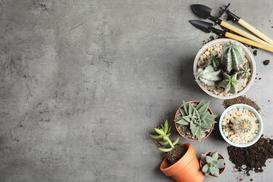 Jaka ziemia do kaktusów będzie odpowiednia? Wyjaśniamy krok po kroku