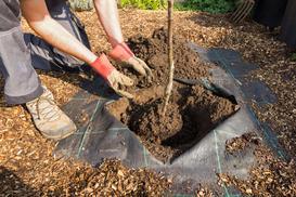 Wybieramy sadzonki drzew owocowych - rodzaje, ceny, opinie