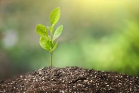 Okres wegetacyjny roślin w Polsce - wyjaśniamy krok po kroku