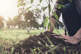 Sadzonki drzew krok po kroku - ceny, opinie, rzeczy, na które warto zwrócić uwagę