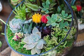 Sukulenty w szkle - odmiany, sadzenie, kompozycje, porady