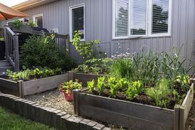 Grządki podwyższone – zobacz, jak zrobić warzywniak na podwyższeniu