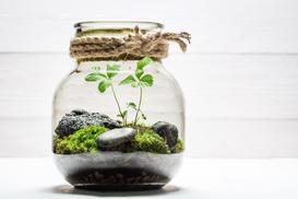 Jak zrobić las w słoiku? Wyjaśniamy krok po kroku