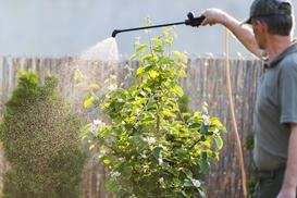 Wiosenne opryski drzew owocowych - terminy, preparaty, porady