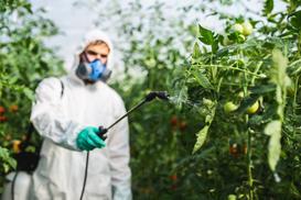 Oprysk pomidorów krok po kroku - terminy, polecane preparaty, opinie